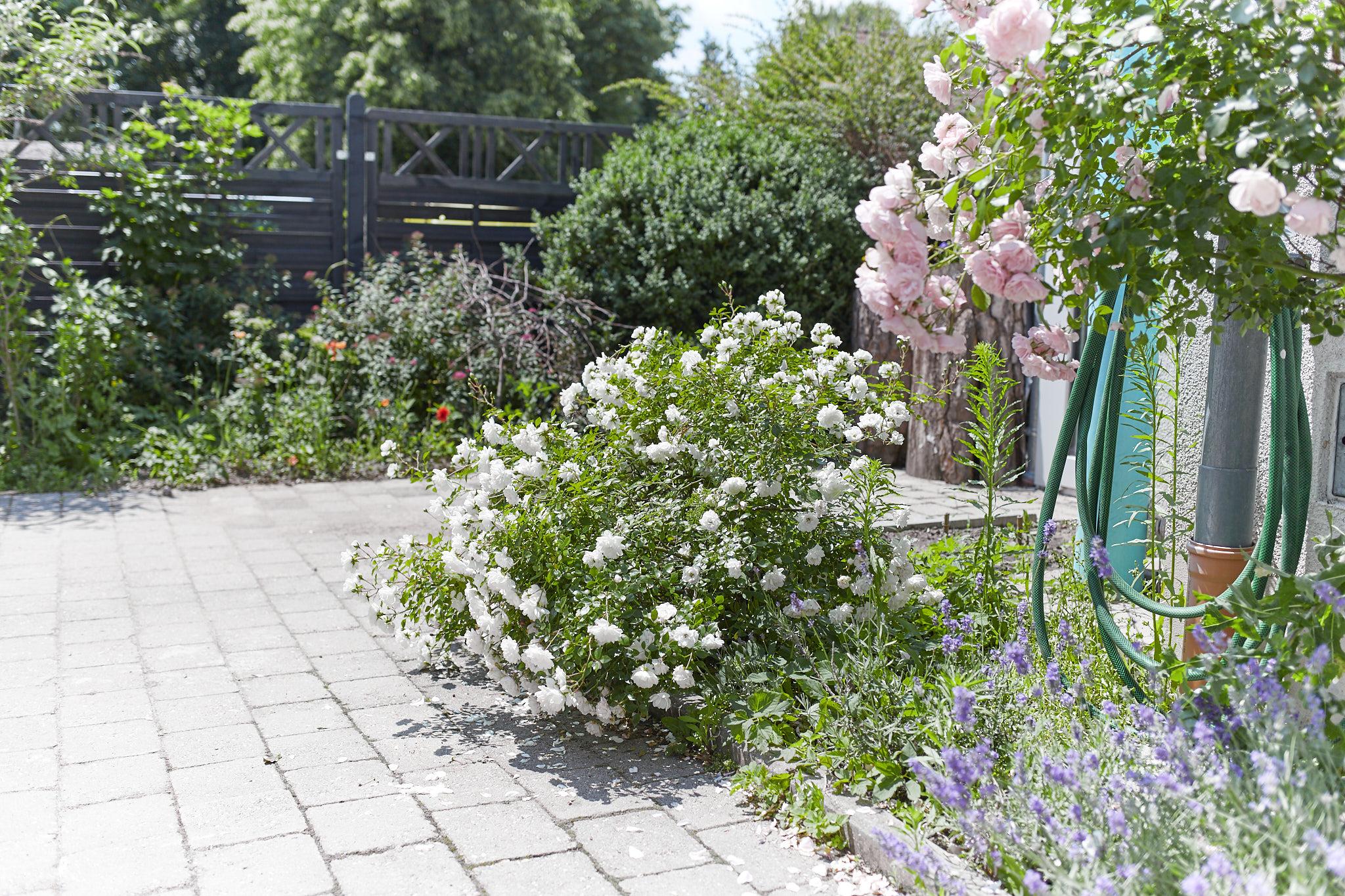 Liebevoll gestalteter Garten mit Rosen